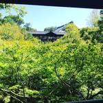 【京都苔めぐり】苔マニア必見!有名寺院の庭園がジオラマ苔アートに☆京都随一の紅葉名所「東福寺」
