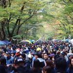 待ち遠しいイベントの日がやって来た!「糺の森ワンダーマーケット」10/28開催!【下鴨神社・糺の森】