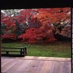 【京都紅葉特集】人形の寺と親しまれる「宝鏡寺」で人形展と紅葉を楽しむ