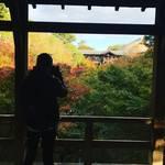 【2018京都紅葉最新】大本命の絶景スポット!紅葉グラデーションが見事☆「東福寺」【11月15日時点】