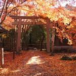 洛北に位置する隠れた紅葉の名所「蓮華寺(れんげじ)」