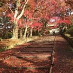 【2018京都紅葉最新】雨上がりの奇跡の赤絨毯降臨!根強いファンも多い紅葉スポット「山科毘沙門堂」