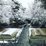 【京都お寺めぐり】お忍び感漂う境内の雪化粧!冬らしい装いの白砂壇も絶妙な風景に☆鹿ケ谷「法然院」