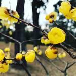 【冬の京都ぶらり】季節の花も咲き誇る古都の中心!広大な敷地で市民憩いの場「京都御苑」