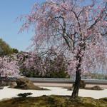 とっておきの京都の桜「西京編 ①」名所から穴場、地元グルメまで