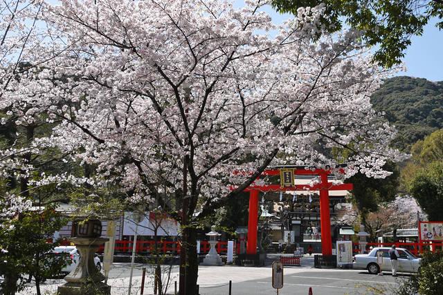 とっておきの京都の桜「西京編②」名所から穴場、地元グルメまで