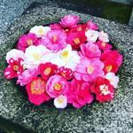 【京都お寺めぐり】白砂壇の砂絵は桜!冬の終わり告げる椿もぽたり☆鹿ケ谷「法然院」
