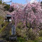 とっておきの京都の桜「京北編①」気分はプチトリップ!森林に囲まれた京北町へ