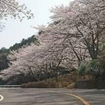 とっておきの京都の桜「高雄編②」名所から穴場、地元グルメまで