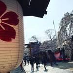 【2019京都桜情報】『桜の神社』として名高い京都屈指の名所!夜桜用茶屋も準備バッチリ☆「平野神社」