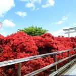 長岡天満宮の春の風物詩、真っ赤なキリシマツツジ【駅から歩ける絶景】