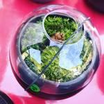【京都新緑めぐり】八重桜も終盤の桜の名所『哲学の道』で見つけた珍土産☆苔の八百鉢「苔ポン」