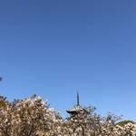 世界遺産の「御室仁和寺」桜は散っても過去から続く雄大な青空を満喫!