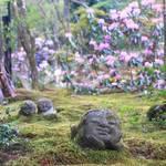 【春の京都】「大原三千院」の春~シャクナゲの名所~