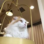 河原町のお洒落なネコカフェ「MOCHA」でかわいい猫ちゃんたちとまったり♡