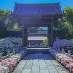 【京都花めぐり】3000本のツツジが咲き誇る岩倉の「妙満寺」