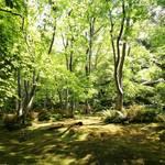 苔庭と新緑が美しい。奥嵯峨の【祇王寺】は京都のヒンヤリ・涼スポット