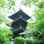 京都のあじさいを巡る|「真如堂」で1,000株のあじさいと新緑に癒される