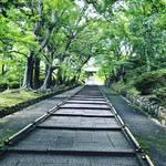 【京都新緑めぐり】JR東海『そうだ京都、行こう。』の有名スポット!青もみじの名所☆「毘沙門堂」