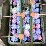 【あじさいウィーク】長岡京  柳谷観音 楊谷寺で 紫陽花に癒される【フォトジェニック】