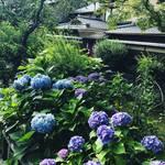 【季節の花】京都屈指の観光名所・祇園白川に咲き誇る紫陽花!しっぽりと情緒漂うスポット☆