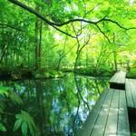 【南禅寺】心癒される庭園~天授庵~【京都フォトスポット巡り】