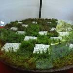 【苔ファンの方に】モシュ印・コケ寺リウムで苔を楽しもう♪