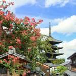 【八坂の塔】八坂の塔を華やかに彩るサルスベリが見頃です♪【京都フォトスポット巡り】