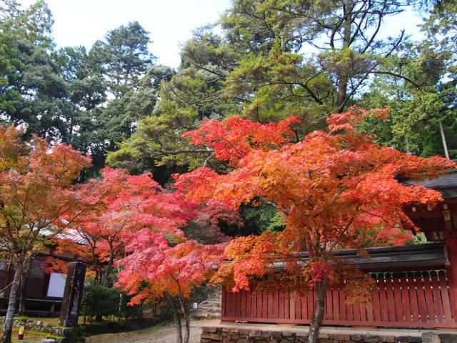 とっておきの京都の紅葉「高雄編 」紅葉の名所から地元グルメまで