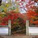 とっておきの京都の紅葉「西京編 vol2」紅葉の名所から地元グルメまで