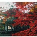 とっておきの京都【11/16〜12/1】天皇陛下御即位記念「京都山科非公開文化財等の特別公開」開催【山科南エリア編】