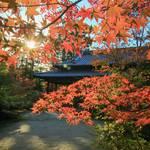 【2019紅葉】趣深い二つの庭園が魅力。一部見ごろ間近、東庭の紅葉は優美そのもの「南禅寺塔頭 天授庵」【南禅寺】