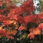 美しい紅葉が見頃☆錦秋の絶景を満喫できる「嵐山・高雄パークウエイ」