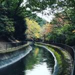 【京都紅葉】水面に映る紅葉並木もまた絶景!区民の憩いスポット「山科疏水」