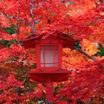 【2019紅葉】毎年早期に見頃を迎え、真紅の紅葉に癒される「鍬山神社(くわやまじんじゃ)」【亀岡市】