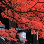 【2019紅葉巡り】岡崎エリアの名所、真如堂・金戒光明寺