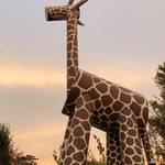 快適な空間はお散歩にもぴったり!月替わりの企画も楽しみな京都市動物園☆