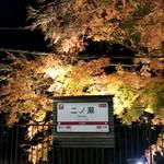 【京都紅葉スポット】叡山電鉄で行こう!美しい秋色に包まれる『もみじのトンネル』