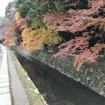 【京都紅葉】桜やもみじだけじゃない!一際真っ赤な紅葉が疏水を彩る☆「哲学の道」