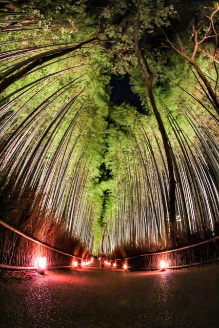【京都冬の風物詩】冬期限定のライトアップ!新企画が加わり更に幻想的に「嵐山花灯路2019」