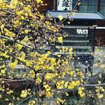 【京都お寺めぐり】季節の花『ロウバイ』が見事に咲き誇る!『走り坊さん』で知られる穴場スポット☆「大蓮寺」