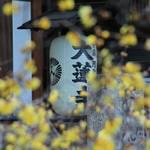 【京都花めぐり】冬に咲く花 蝋梅(ろうばい)が楽しめる東山二条「大蓮寺」