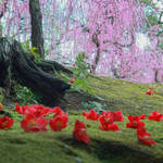 【京都花めぐり】見頃近し♪しだれ梅と椿の絶景が楽しめます♪方徐の大社「城南宮」(じょうなんぐう)