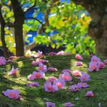 【京都花めぐり】有楽椿が美しい足利家の菩提寺「等持院(とうじいん)」