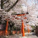 京都には桜と一緒に撮りたい景色がある!写真を撮りたい桜スポット【まとめ】
