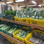日曜日は早起きして大原へ行こう!新鮮野菜を手に入れる、里の駅大原の朝市