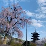 桜が最盛期!世界遺産「東寺」平安時代より受け継がれる壮大な美しさ