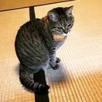 【京都カフェめぐり】ネコカオスのお寺?!世界中のネコ好き注目店☆十猫十色のギャラリーも「猫猫寺(にゃんにゃんじ)」