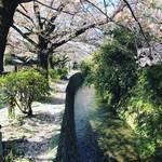 【2020京都桜風景】そろそろシーズン終盤!ピンク色の桜吹雪も舞う「哲学の道」