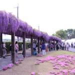 【京都イベント】「鳥羽の藤」「蹴上のつつじ」一般公開が中止に!新型コロナの影響で